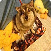 Adopt A Pet :: PHANTOM - Upper Marlboro, MD