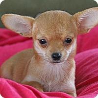 Adopt A Pet :: Topaz - Yuba City, CA