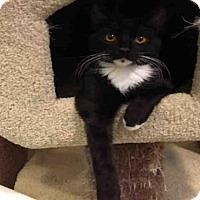 Adopt A Pet :: BRYAN - Santa Clara, CA