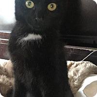 Adopt A Pet :: Charlie - Covington, KY