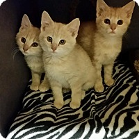 Adopt A Pet :: Tia, Ariel, Sophia - Lexington, KY