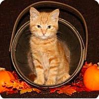 Adopt A Pet :: Correction Tape - Mission, KS
