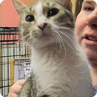 Adopt A Pet :: CiCi - Reeds Spring, MO