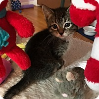 Adopt A Pet :: Crystal - Whitehall, PA