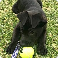 Adopt A Pet :: Baloo - BONITA, CA