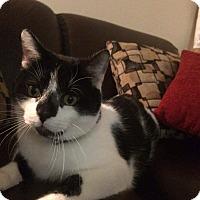 Adopt A Pet :: Bobo - Columbus, OH