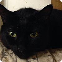 Adopt A Pet :: Shadow #2 - Salem, NH