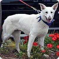 Adopt A Pet :: Mia - Downey, CA