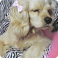 Adopt A Pet :: Angel - Sugarland, TX
