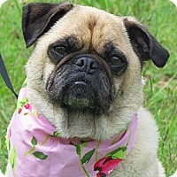 Adopt A Pet :: Macy - Providence, RI