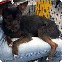 Adopt A Pet :: Pepper - Phoenix, AZ