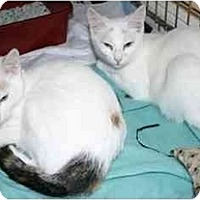 Adopt A Pet :: Malena & Mallory - Little Falls, NJ