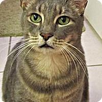 Adopt A Pet :: Finn McCool - Seminole, FL