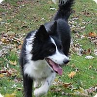 Adopt A Pet :: Trixie - Naperville, IL