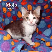 Adopt A Pet :: Mojo - Bentonville, AR