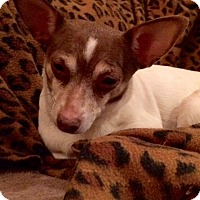 Adopt A Pet :: Pokey Pup (Missy) - Edmond, OK