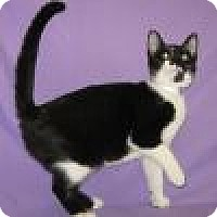 Adopt A Pet :: Katera - Powell, OH