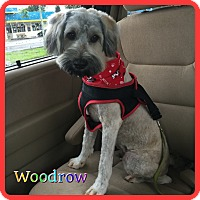 Adopt A Pet :: Woodrow - Hollywood, FL