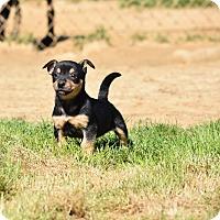 Adopt A Pet :: Jett - Groton, MA