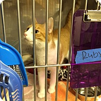 Adopt A Pet :: Ruby - Byron Center, MI