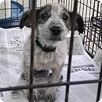 Adopt A Pet :: Hildi - Avon, NY