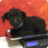 Adopt A Pet :: A1031341 - Bakersfield, CA