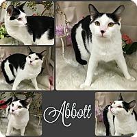 Adopt A Pet :: Abbott - Joliet, IL