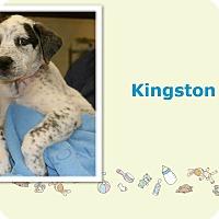 Adopt A Pet :: Kingston - Tampa, FL
