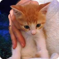 Adopt A Pet :: Sam - Parkton, NC