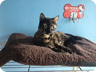 Domestic Shorthair Cat for adoption in LaGrange, Kentucky - Ollie