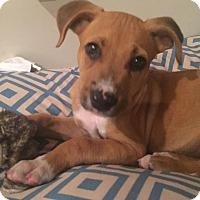 Adopt A Pet :: Eli - North East, FL