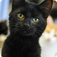 Adopt A Pet :: Voldo - Aiken, SC