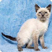 Adopt A Pet :: Nidorina - Mt. Prospect, IL