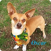 Adopt A Pet :: Oscar - El Cajon, CA
