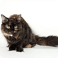 Adopt A Pet :: Sophie - Rockaway, NJ