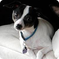 Adopt A Pet :: Malone - Cleveland, OH