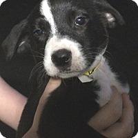 Adopt A Pet :: Patrick#6F - geneva, FL