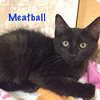 Adopt A Pet :: Meatball - Foothill Ranch, CA