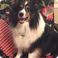 Adopt A Pet :: Jade - Mission, KS