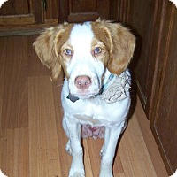 Adopt A Pet :: PA/Zoey - Seven Valleys, PA