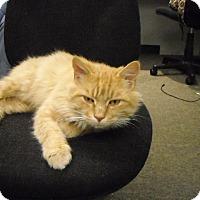 Adopt A Pet :: Charlie - Riverside, RI