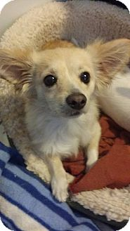 Inland Empire Dog Adoption