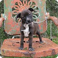 Adopt A Pet :: AVERY - Bedminster, NJ