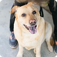 Adopt A Pet :: Martha the Magnificent - Los Angeles, CA
