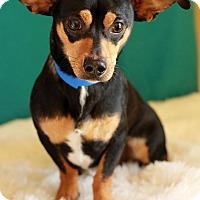 Adopt A Pet :: Tinker - Waldorf, MD