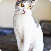 Adopt A Pet :: Rosebud - Xenia, OH