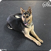 Adopt A Pet :: Shadow - Rockwall, TX