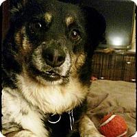 Adopt A Pet :: Dora - Bradenton, FL