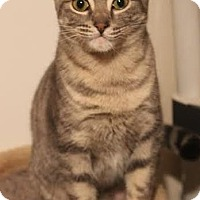 Adopt A Pet :: Maddie - Sweetheart! - Huntsville, ON