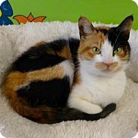 Adopt A Pet :: C-69838 Saje - Westampton, NJ